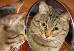 How to Scare a Cat with Mirrors